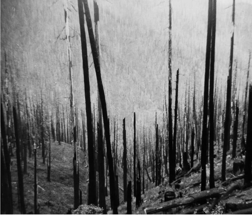 Tillamook Burn 1933